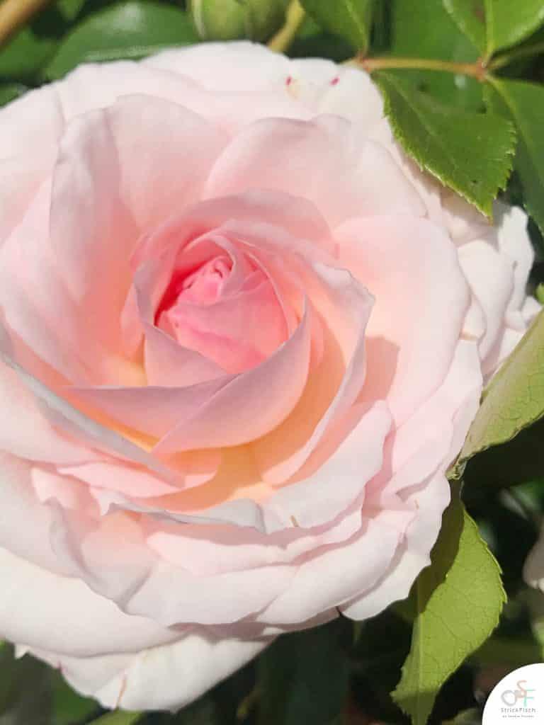 Strickprojekt-hortensienblüte